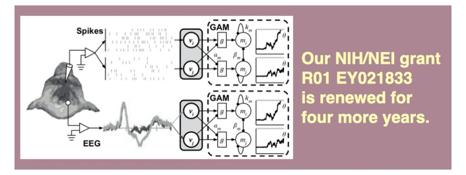 """Our NIH/NEI grant """"Stochastic Models of Visual Decision Making and Visual Search"""" is Renewed"""
